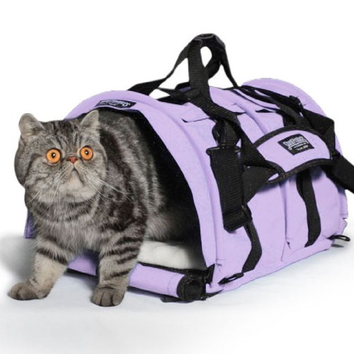 i want kitty